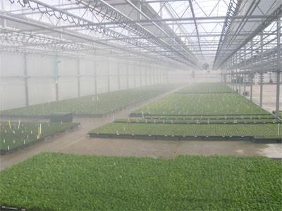 مه ساز برای گلخانه