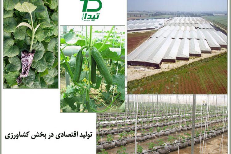 اهمیت گلخانه برای تولید اقتصادی
