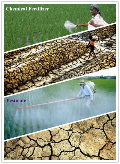کاهش آلودگی محیط زیست با استفاده از کودهای حیوانی